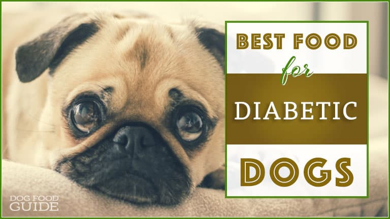 Best Choices For A Diabetic Food For Your Dog In 2019
