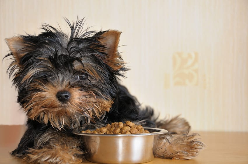 How Many Times a Day Should I Feed My Dog? 2