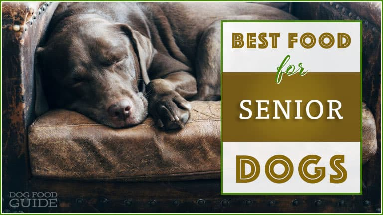 6 Best Healthy Dog Food Brands For Senior Dogs