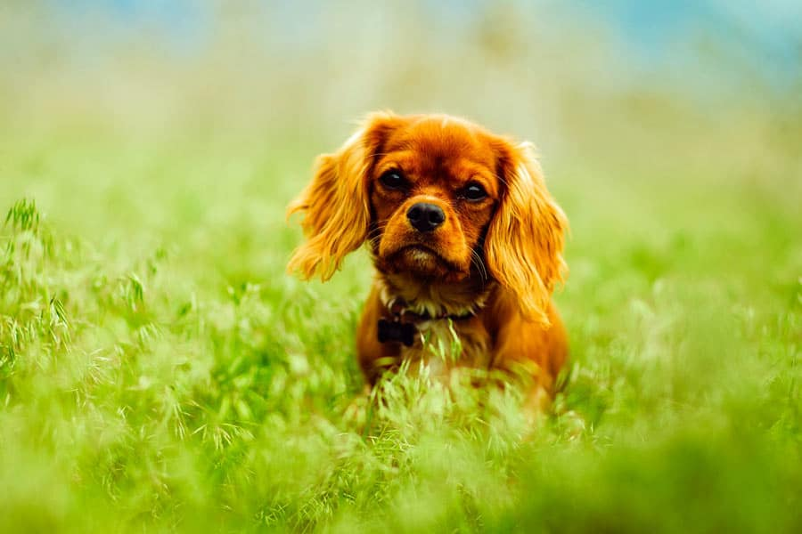 Best Food For Allergies Dogs