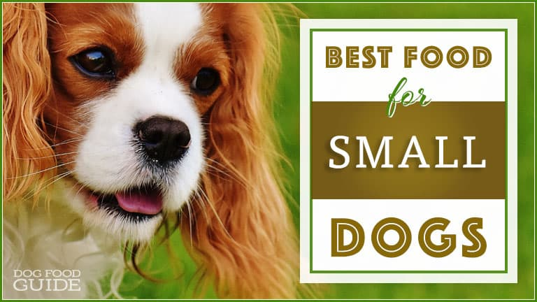 Best dog food for small dogs 7 healthy brands for small for Best dog breed for you