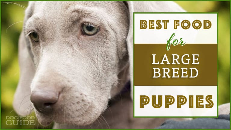 Best 5 Brands To Feed A Large Breed Puppy