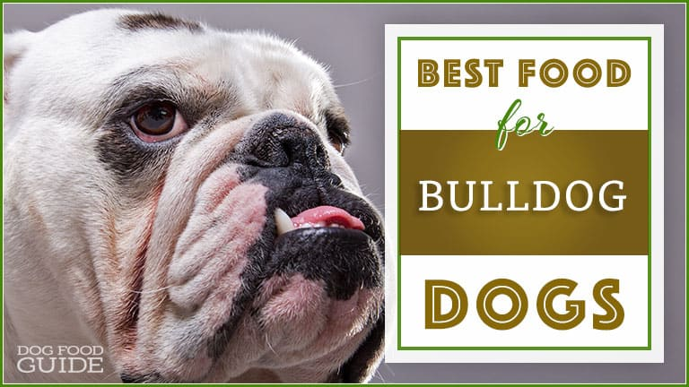 Best Dog Food For Bulldogs Top Puppy Adult Senior