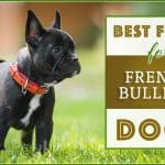 10 Best (Healthiest) Dog Foods for French Bulldogs in 2020