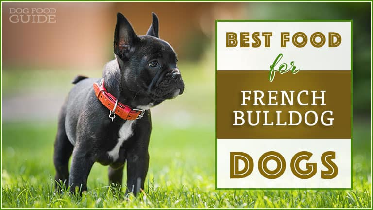 best-french-bulldog-food