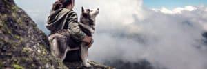 9 Best (Healthiest) Dog Food for Siberian Huskies in 2020 7