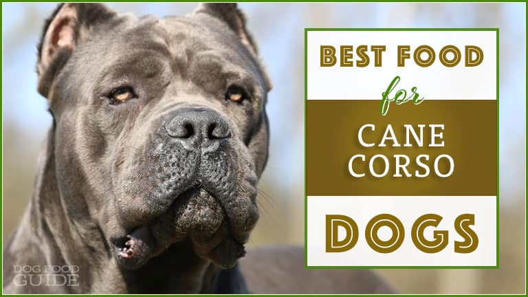Best Dog Food For Cane Corsos