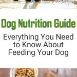 Dog Nutrition Guide: Everything You Need to Know About Feeding Your Dog