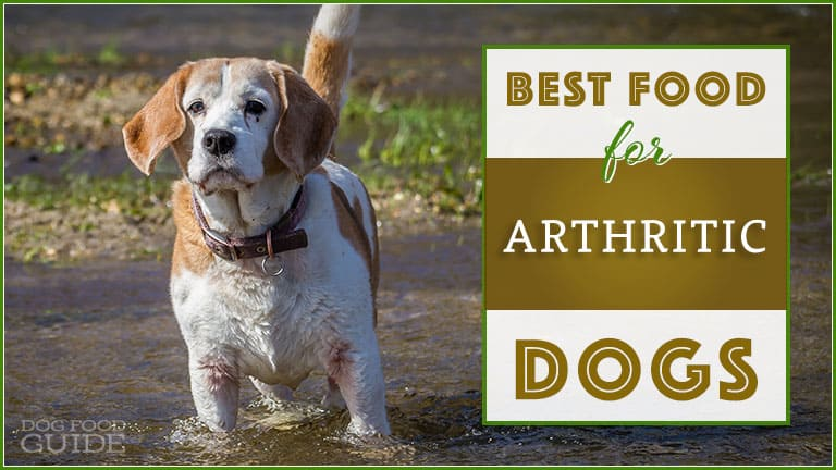 10 Best Dog Foods for Hip & Joint Health (Arthritic Dogs) 7