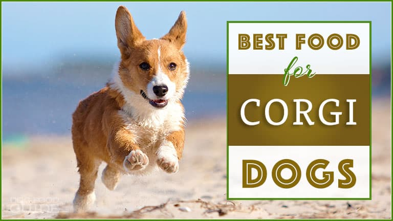Best Dog Food For Corgis Top Puppy Adult Senior Recommendations