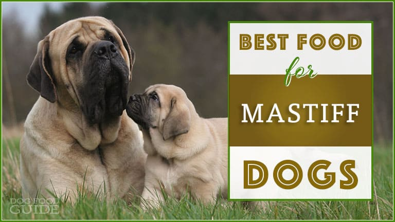 Best Food For Mastiffs Top Puppy Adult Senior Recommendations