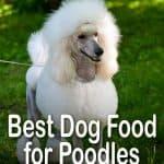 10 Best & Affordable Dog Foods for Poodles in 2020