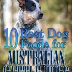 10 Healthiest & Best Dog Food for Australian Cattle Dog in [year]