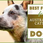 10 Best (Top Rated) Dog Foods for Australian Cattle Dogs in 2020
