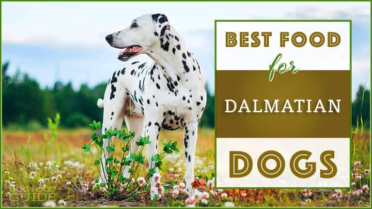 Best Dog Food For Dalmatians Top Puppy Adult Senior