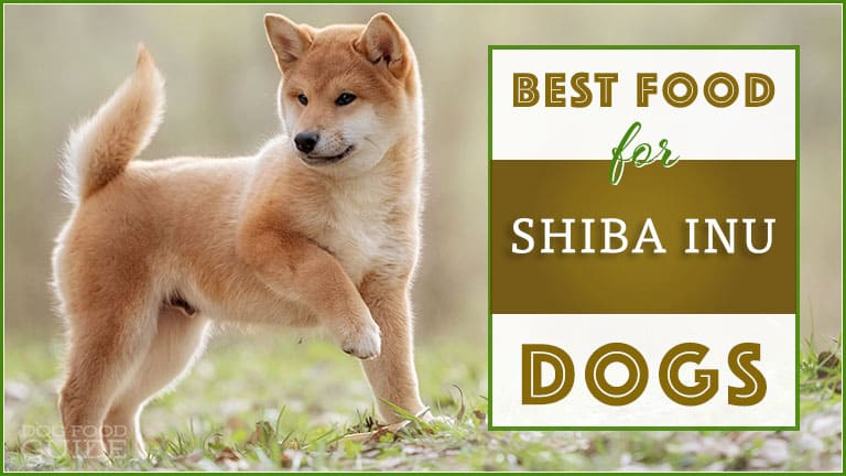 Dog Foods For Shiba Inus In 2020