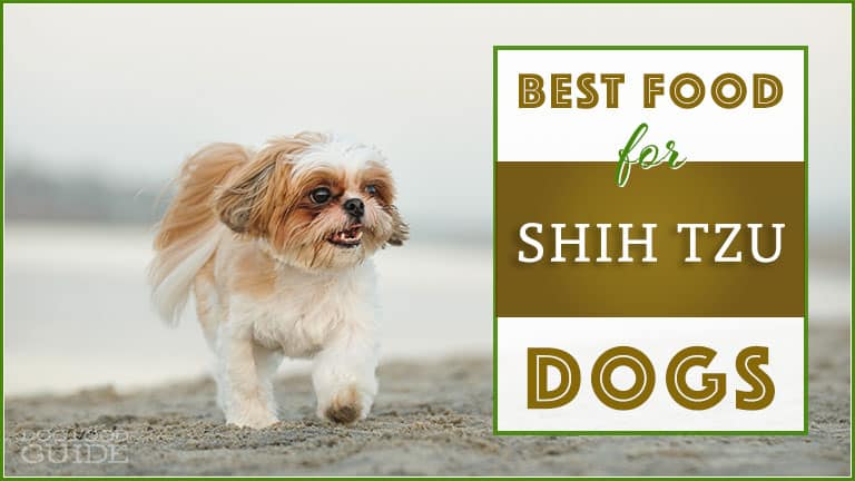 Best Dog Food For Shih Tzus Top Puppy Adult Senior