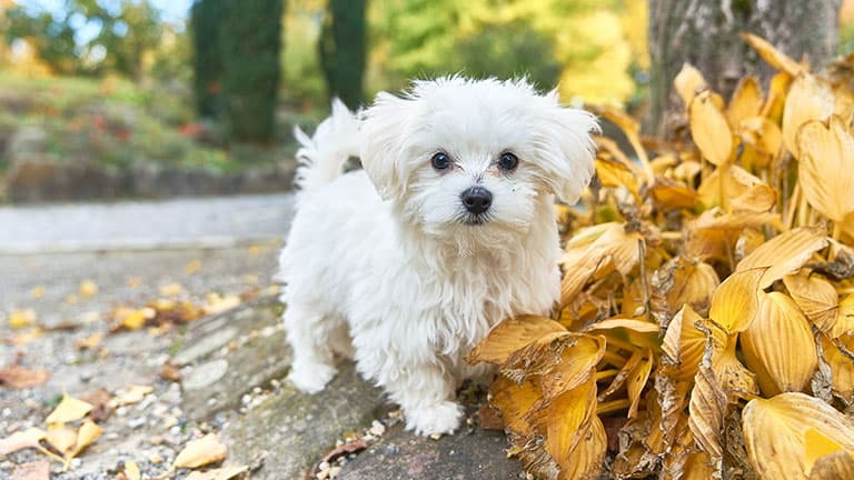 9 Best (Healthiest) Dog Food For Maltese in 2020 9