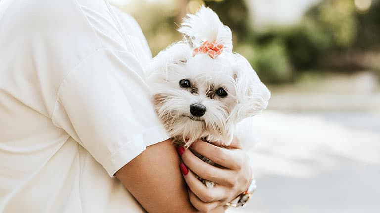 9 Best (Healthiest) Dog Food For Maltese in 2020 7