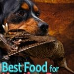 10 Best & Healthiest Dog Food For Hunting Dogs in 2020
