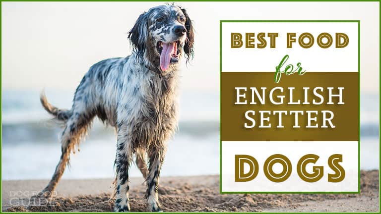 5 Best Healthiest Options Dog Foods For English Setters