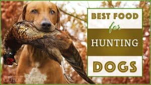 9 Best (Healthiest) Dog Food For Hunting Dogs in 2020 7