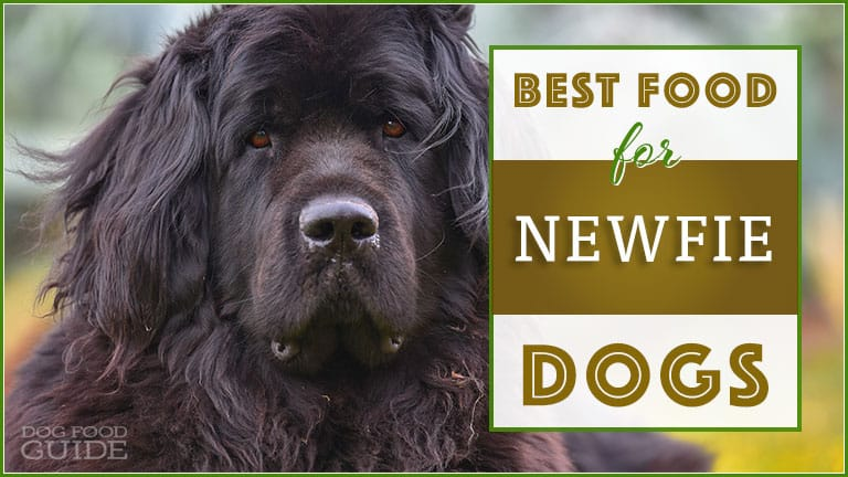 Victor Dog Food Reviews >> 10 Best (Healthiest) Dog Foods for Newfoundlands in 2020