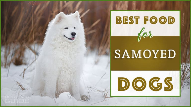 10 Best (Top Rated) Dog Foods for Samoyeds in 2019