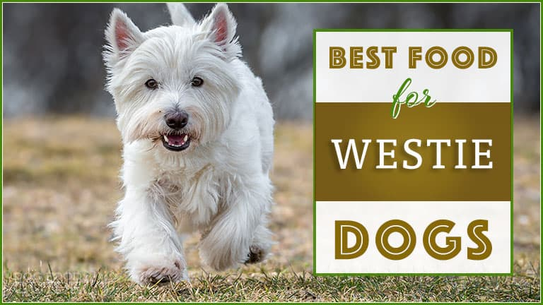 Best Dog Food For Westies : Top Puppy, Adult & Senior
