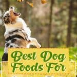 10 Best (Healthiest) Dog Foods for Active Dogs in 2020