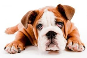 9 Best Dog Foods for Acid Reflux in 2020 27