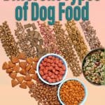 Different Types of Dog Food Available to Feed your Dog