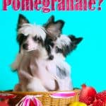 Can Dogs Eat Pomegranate? What Should You Do If Your Dog Has Eaten Pomegranate?